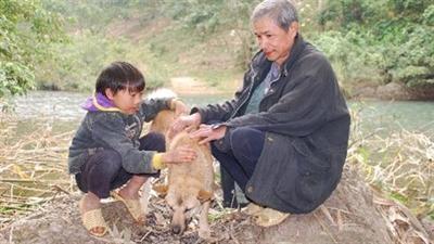 Chú chó 10 ngày không ăn, phủ phục bên mộ chủ nhân