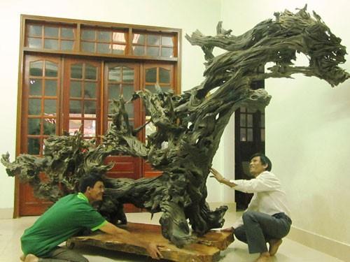 Gốc trâm đỏ của anh Nguyễn Phi Hùng.