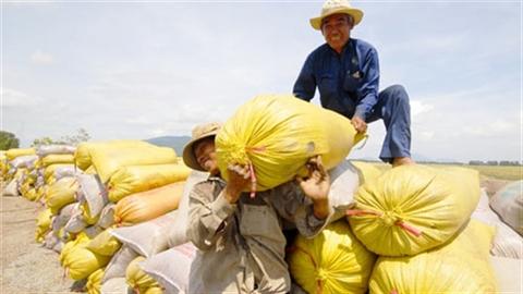 Xuất khẩu gạo tăng, VN vẫn phụ thuộc vào thị trường TQ