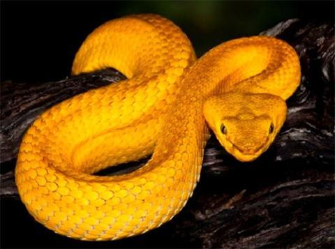 Đảo rắn Brazil - nơi kinh hoàng nhất thế giới-3