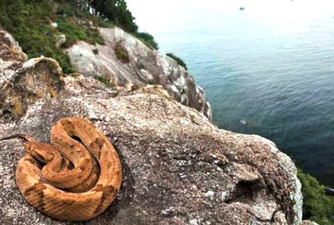 Đảo rắn Brazil - nơi kinh hoàng nhất thế giới-5