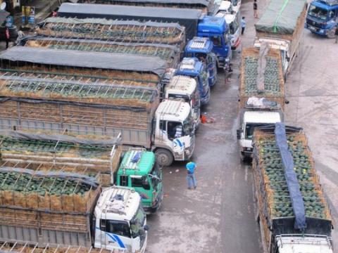 Hàng trăm xe tải chở dưa hấu bị ùn tắc ở cửa khẩu Tân Thanh (Lạng Sơn) hồi tháng 3/2014