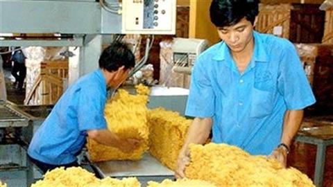 Chặt vàng trắng cao su: Phụ thuộc một thị trường sẽ chết!