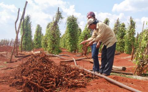Thương lái ồ ạt thu mua các loại cây quý hiếm, cây dược liệu địa phương cần giám sát chặt chẽ