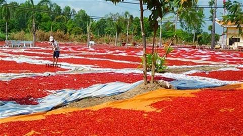 Việt Nam lười thay đổi nên thích bán cho Trung Quốc