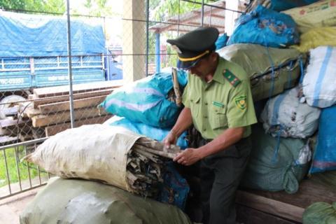 Lực lượng kiểm lâm huyện thu giữ 1,1 tấn vỏ cây bùi.