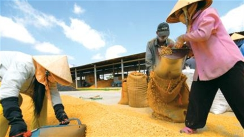 Chính sách bán rẻ, gạo Việt có thể bị Mỹ kiện