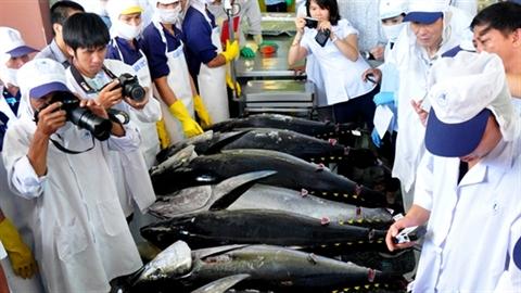 Nhật giúp giá cá ngừ, rau xanh