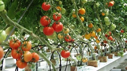 500 triệu USD nhập hạt giống: Việt Nam