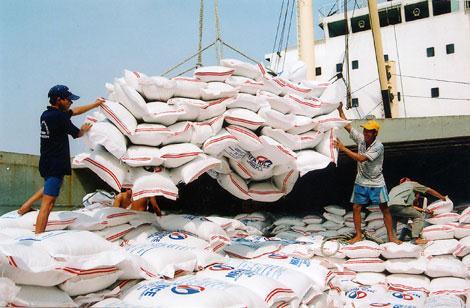 Gạo Việt Nam ngày càng mất giá bởi thói quen thắng thầu bằng mọi giá của hai tổng công ty lương thực