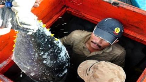 Câu cá ngừ kiểu Nhật:Ngư dân nói thẳng cán bộ... dạy sai!