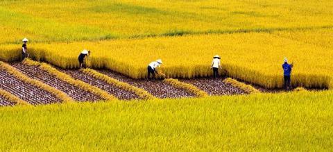 Mặc dù Việt Nam là một trong những quốc gia xuất khẩu gạo hàng đầu thế giới nhưng giống lúa, phân bón, thuốc trừ sâu chủ yếu đi nhập khẩu
