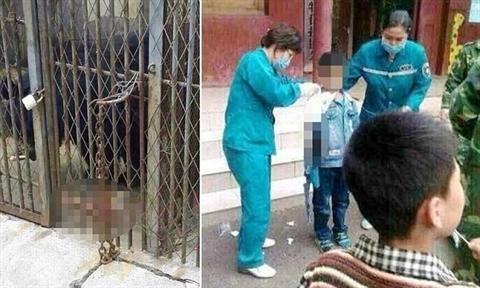 Gấu trong chuồng cắn đứt rời tay cậu bé 9 tuổi