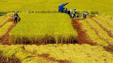 'Xuất khẩu' nông dân Việt để đổi phận?