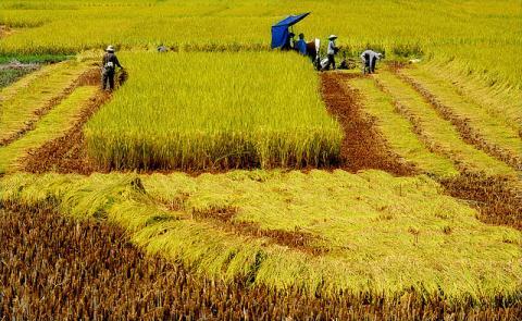 Nông dân Việt giỏi nhưng đời sống lại bấp bênh