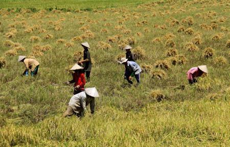 Từng có kế hoạch đưa nông dân Việt Nam sang châu Phi nhưng không thành