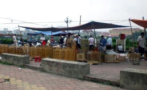 Từ khoảng nửa năm nay, chợ chim trên nền đất dự án đi vào hoạt động sôi nổi. Kẻ mua người bán nhộn nhịp cả ngày.
