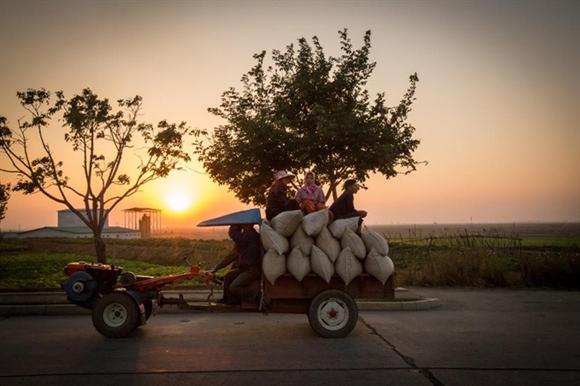 Trên đường nông thôn, chiếc máy kéo nhỏ chở đầy tải thóc cùng những người nông dân bên trên.