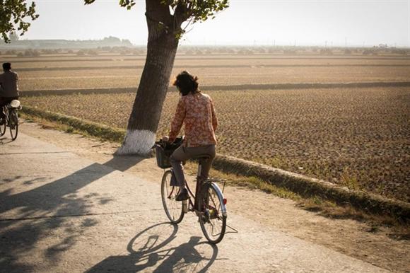 Một phụ nữ đạp xe ngang qua những cánh đồng rộng lớn đã gặt xong chỉ còn trơ gốc rạ.