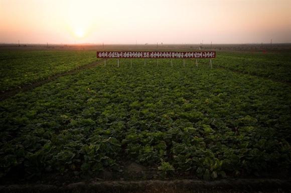Dù chính phủ Triều Tiên đang tăng năng lực sản xuất nông nghiệp, vẫn còn một chặng đường dài phía trước để đạt đến mục tiêu giảm phụ thuộc vào viện trợ quốc tế.