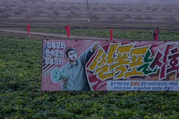 Tấm biểu ngữ lớn được đặt giữa ruộng rau cải thảo.
