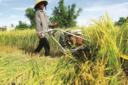 Các mô hình sản xuất lớn đang trở thành điểm tựa tăng trưởng tín dụng lĩnh vực tam nông