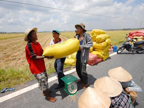 Nông dân Việt thường quen với việc gặt xong bán lúa tươi ngay tại ruộng cho thương lái, không ai trữ thóc