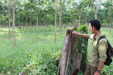 """Chỉ đạo mới về vụ """"Ban phát đất rừng cho quan chức"""""""