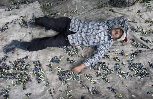 Nông dân nghỉ ngơi trong lúc thu hoạch ô-liu ở thị trấn Anquoun, phía Nam Lebanon