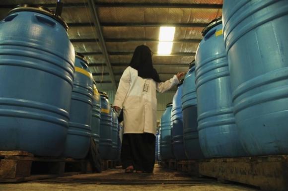 Bên trong nhà máy muối ô-liu, chà là, sản xuất mứt và dầu ô-liu ở thành phố Tabuk, Arab Saudi.