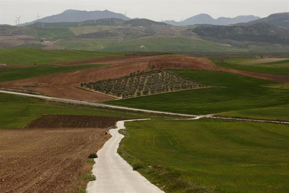 Cánh đồng ô-liu ở Dos Hermanas, gần Andalusian, Seville, Tây Ban Nha.