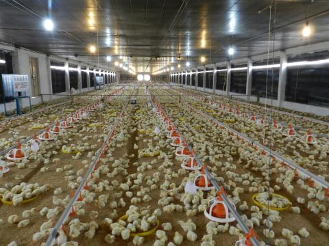 Ngành chăn nuôi Việt Nam đang phụ thuộc quá nhiều vào nước ngoài