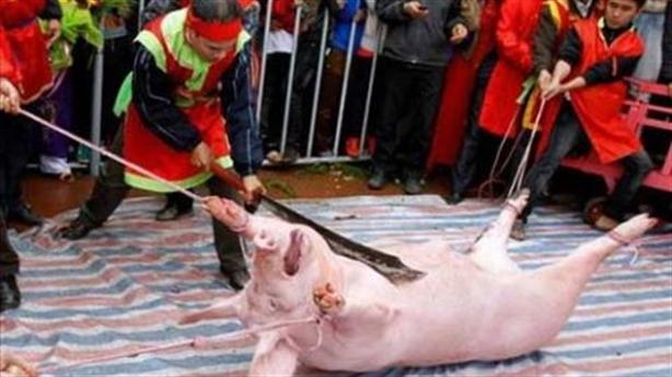 Lễ hội Chém lợn: Phán xét độc đoán, ai dã man hơn?