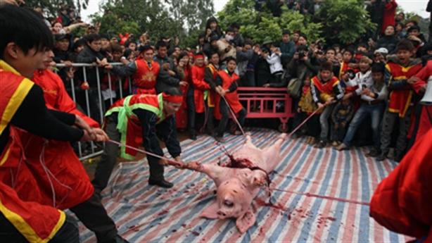 Lễ hội chém lợn: Nên b���, bỏ cả đâm trâu...