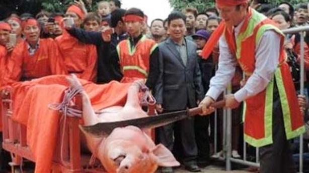 Lễ hội Chém lợn: Dân Ném Thượng quyết vẫn chém lợn