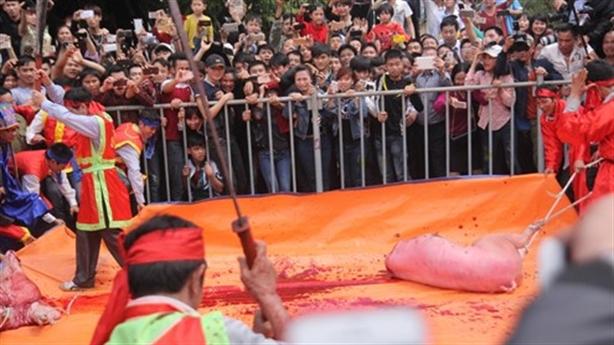 Lễ hội chém lợn: Tiền có máu