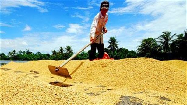 Xuất khẩu gạo: Minh chứng Campuchia vượt mặt Việt Nam