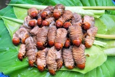 Món ăn này có nguồn gốc từ dân tộc Cơ Tú, còn gọi là sùng đất, đàn ông sử dụng có thể giúp tráng dương, khỏe mạnh.