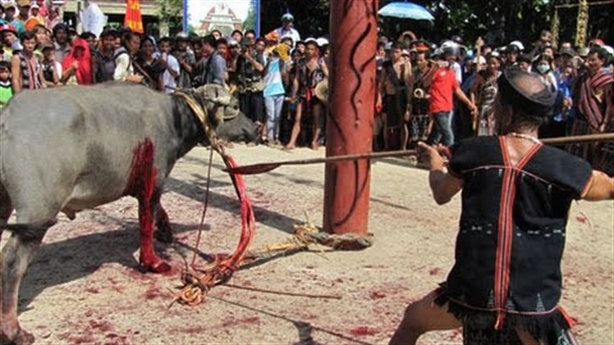 Cấm chém lợn, đâm trâu: Người ngoài cuộc vô minh