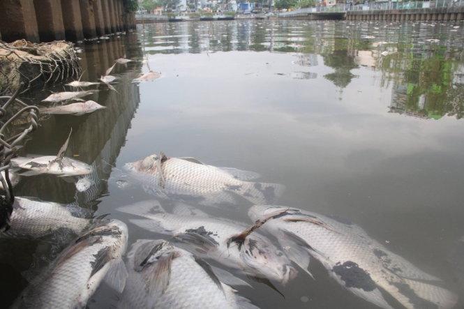 Cá chết chủ yếu là cá rô phi có trọng lượng 0,5 - 1 kg, ngoài ra còn có một vài loài cá khác như cá chép, cá mè, trê, điêu hồng, cá trắm...