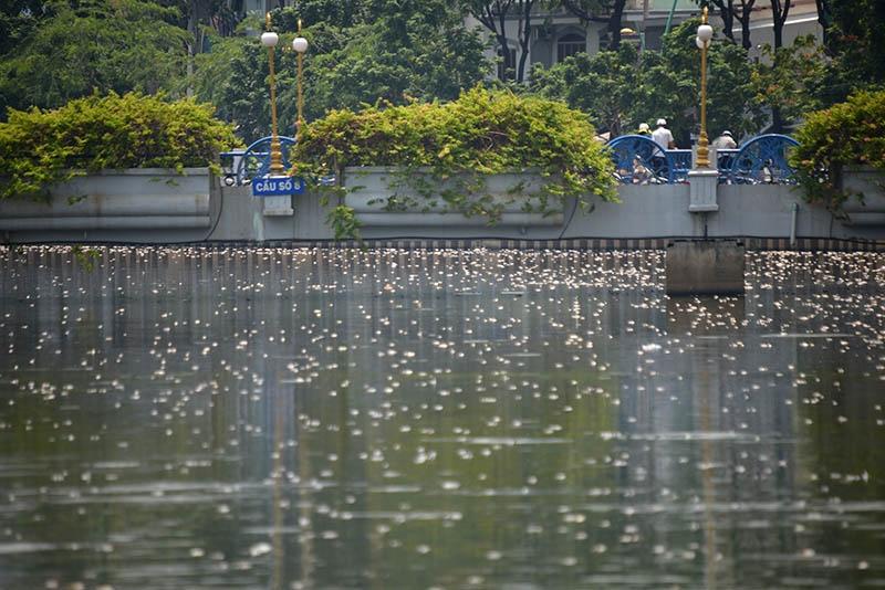 Ngày 17/5, chạy dọc theo kênh Nhiêu Lộc - Thị Nghè - con kênh dài 8,7 km tại TP.HCM chảy qua các quận 3 Tân Bình, Phú Nhuận, Bình Thạnh - người dân thấy hàng loạt xác cá chết nổi trắng trên mặt kênh.