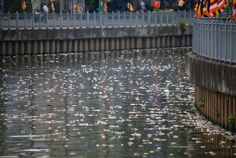 Được biết, hiện tượng cá chết hàng loạt này xảy ra trong nhiều ngày nay. Trong đó, bắt đầu từ chiều qua, số lượng cá chết trở nên nhiều hơn trông thấy.