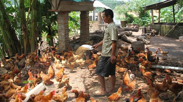 Chất cấm chăn nuôi: Người nông dân bị lừa