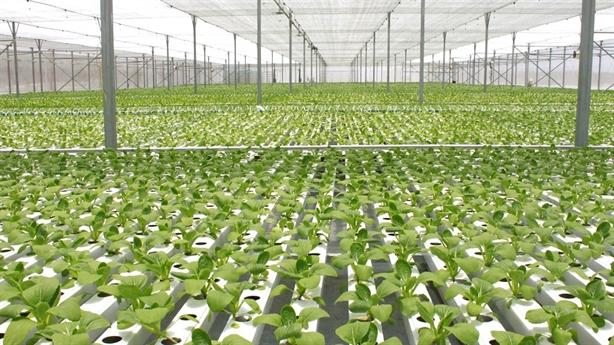 """""""Mục sở thị"""" công nghệ nông nghiệp đỉnh cao tại VinEco"""