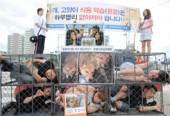"""Thị trưởng thành phố Seongnam, ông Lee Jae-myung phát biểu """"Sự vĩ đại của một dân tộc có thể được đánh giá qua cách họ đối xử với động vật""""."""