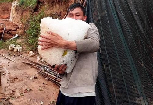 Chiều tối ngày 23/4, trên địa bàn Thành phố Đà Lạt và huyện Lạc Dương, Đơn Dương xuất hiện trận mưa lớn kéo dài hàng tiếng đồng hồ.