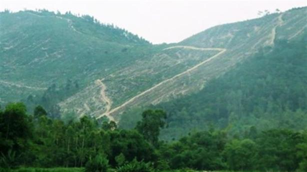 Phó Chủ tịch Vĩnh Phúc: Giữ nguyên rừng Tam Đảo