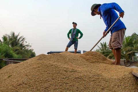 GS Vo Tong Xuan: Gao Viet Nam dang duoc mua gia cao