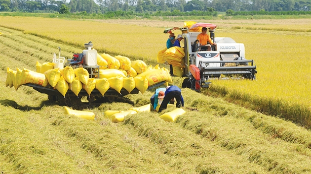 Xuất khẩu gạo bình thường: Lợi ích kép vẫn được đảm bảo