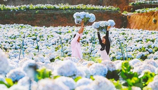 Du lịch Đà Lạt chỉ 300k khi chọn Hoa Dalat Travel
